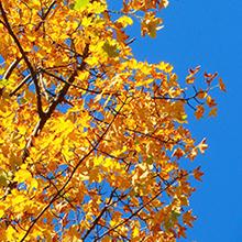 アートの街・六本木で芸術の秋を楽しもう!